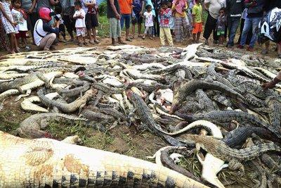 Ινδονησία: Οργισμένο πλήθος σκότωσε 300 κροκόδειλους γιατί έφαγαν συγχωριανό τους