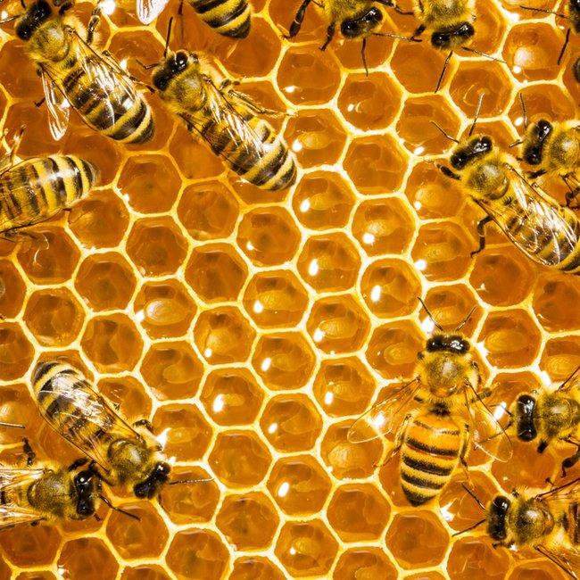 Απίστευτη τραγωδία στην Εύβοια: Πέθανε από τσιμπήματα μελισσών έπειτα από τροχαίο