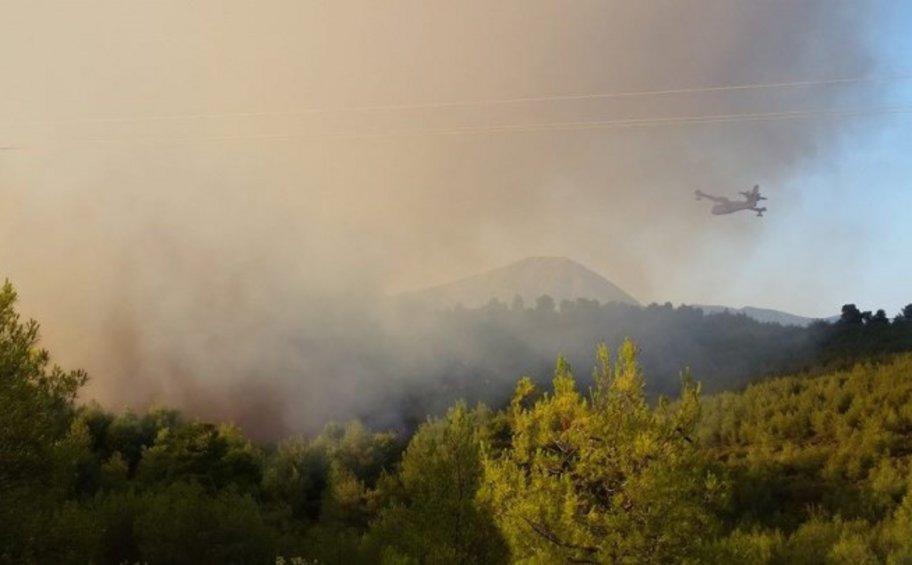 Πυρκαγιά σε πευκοδάσος στην περιοχή της Λευκίμης του δήμου Σουφλίου