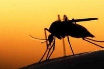 Ανησυχητική αύξηση των ασθενειών που οφείλονται στα κουνούπια στην Ευρώπη