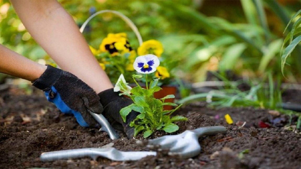 Δράση φύτευσης καλλωπιστικών φυτών από τον Δήμο Θερμαϊκού και εθελοντές