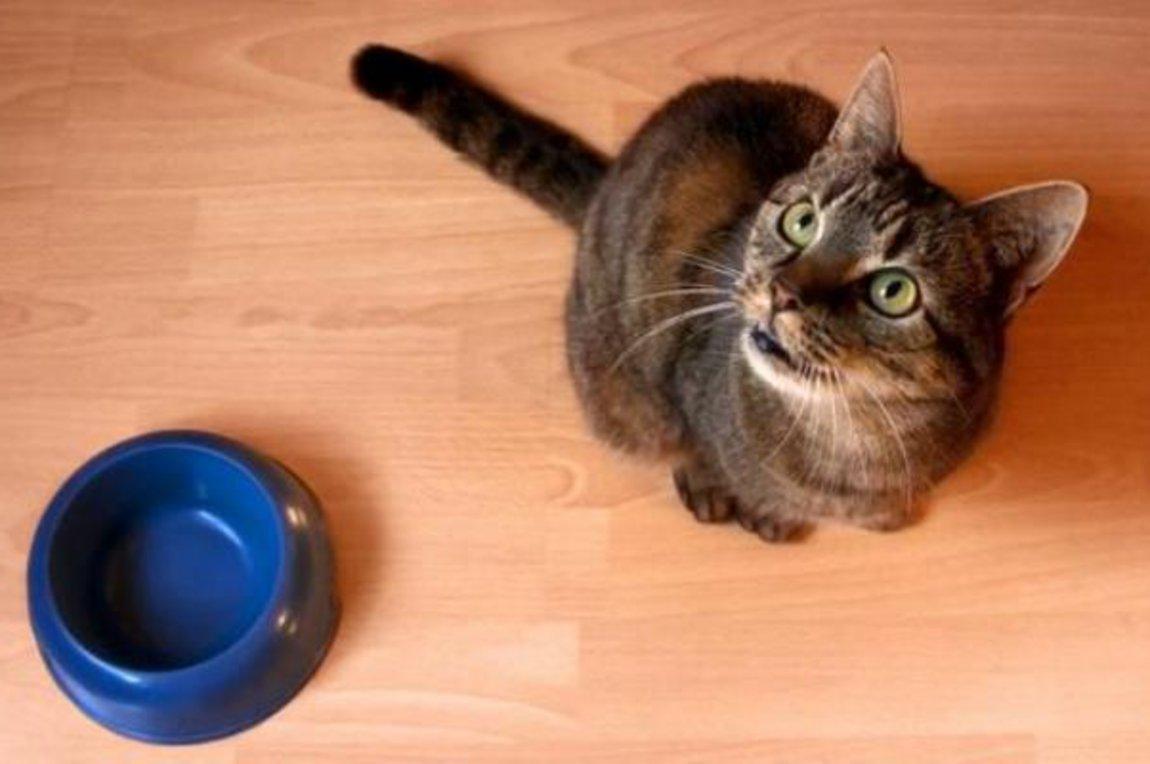 d031358e2ede Τι να κάνετε αν η γάτα σας σταμάτησε να τρώει
