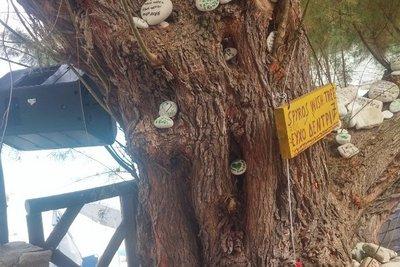 Αντίπαξοι: Πόλος έλξης το «δέντρο των ευχών»