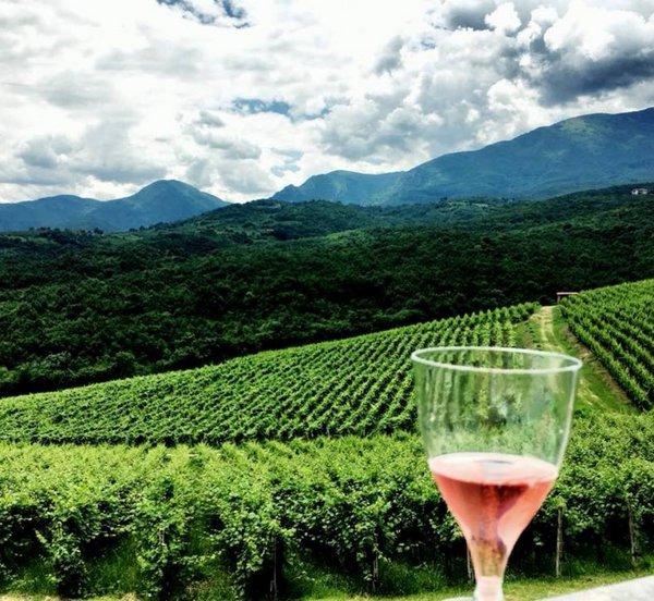 Καταργείται ο Ειδικός Φόρος Κατανάλωσης στο κρασί - Κατατέθηκε η τροπολογία στη Βουλή