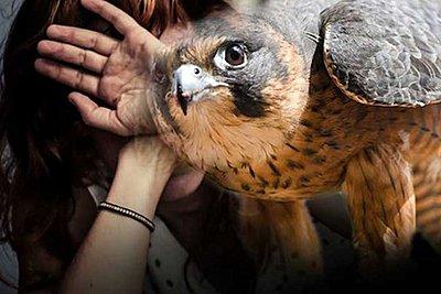 Γυναίκα παραλίγο να χάσει τα μάτια της από επίθεση γερακιού