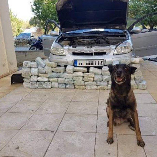 Η στιγμή που αστυνομικός σκύλος εντοπίζει 32 κιλά ναρκωτικών στο Κιλκίς