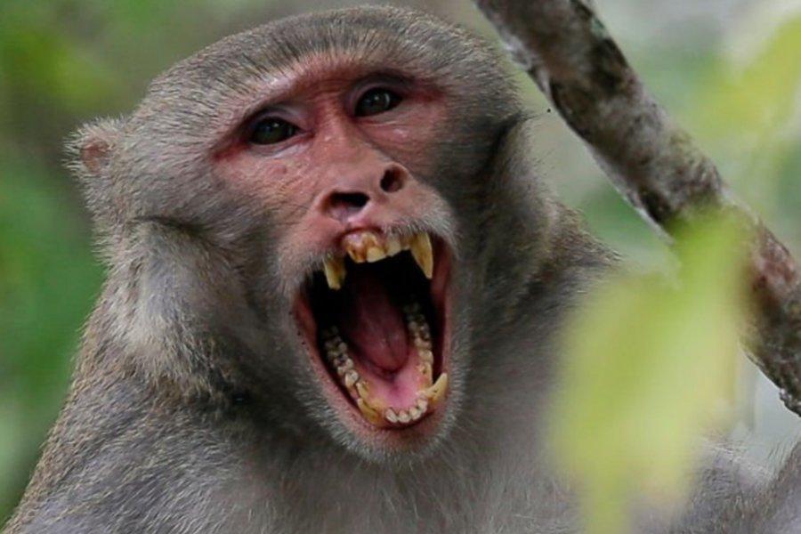 Απίστευτο: Μαϊμού μπήκε σε σπίτι, άρπαξε ένα βρέφος 12 ημερών και το σκότωσε