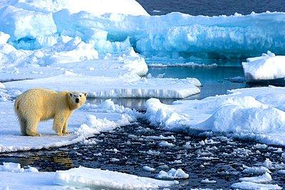 Το 2018 ήταν η δεύτερη πιο ζεστή χρονιά για την Αρκτική από το 1900