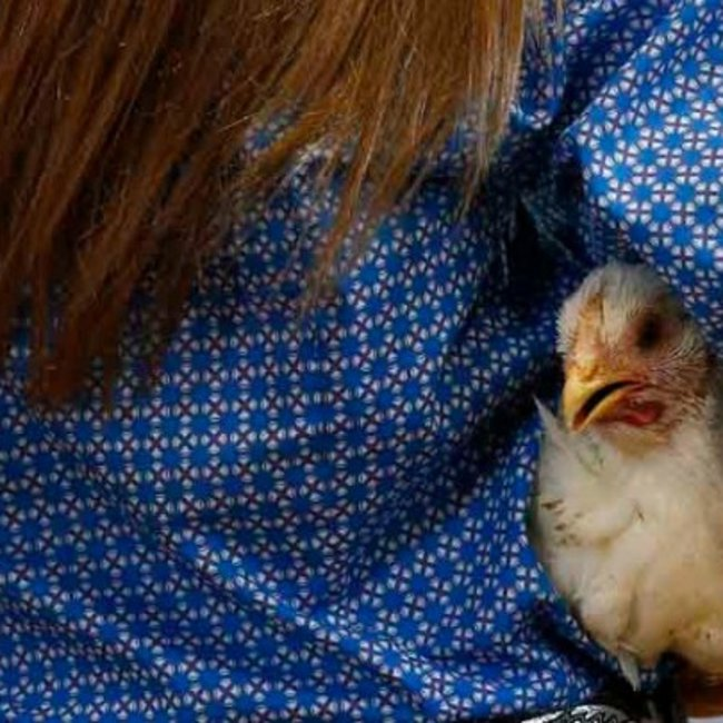 Επιστήμονες: Ζούμε στην «Εποχή του Κοτόπουλου»