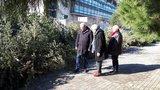 Η Θεσσαλονίκη ανακυκλώνει τα φυσικά Χριστουγεννιάτικα δέντρα της