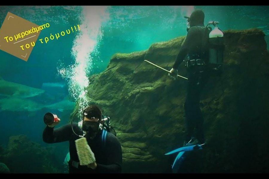 Το μεροκάματο του τρόμου: Κολυμπώντας ανάμεσα σε καρχαρίες στο ενυδρείο Κρήτης