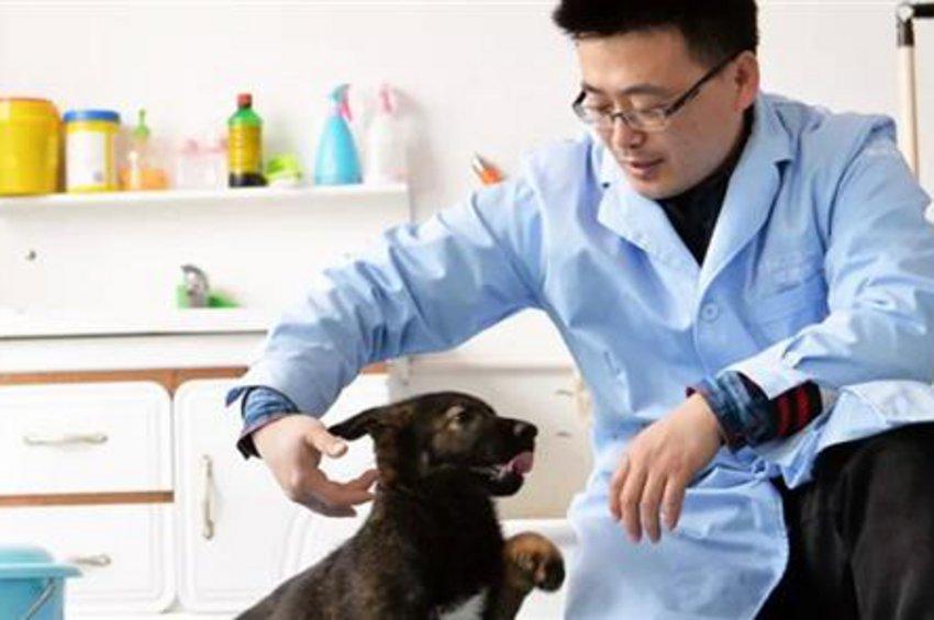 «Σέρλοκ Χολμς»: Κινέζοι κλωνοποίησαν τον πρώτο αστυνομικό σκύλο στην Ιστορία