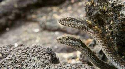 Εφιάλτης για 17 τουρίστριες: Τους έταξαν ονειρεμένη βαρκάδα και τις άφησαν σε νησί γεμάτο φίδια