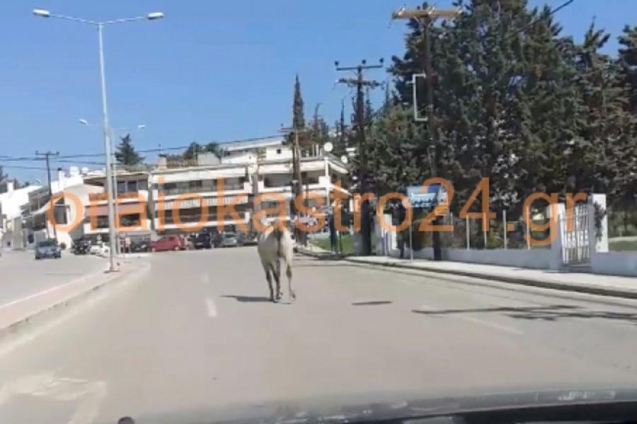 Άλογο έκοβε βόλτες στη μέση του δρόμου - Δεν πίστευαν στα μάτια τους οι οδηγοί