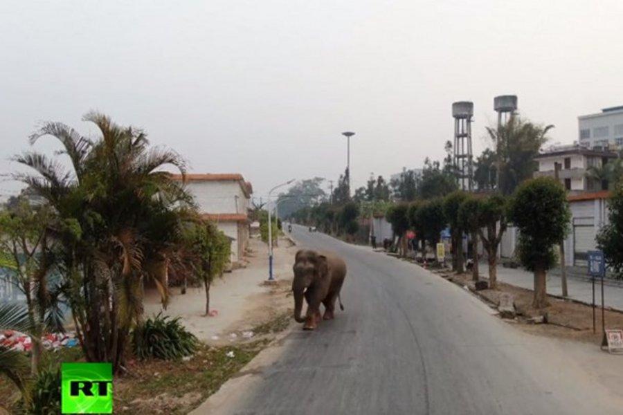 Ελέφαντας «έκοβε» βόλτες σε κεντρική πόλη της Κίνας - Πανικός στους κατοίκους