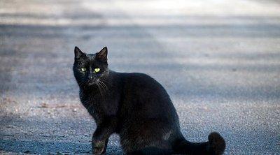 Κτηνωδία στo Τρίκορφο Ναυπακτίας: Πέταξαν οξύ σε αδέσποτη γάτα