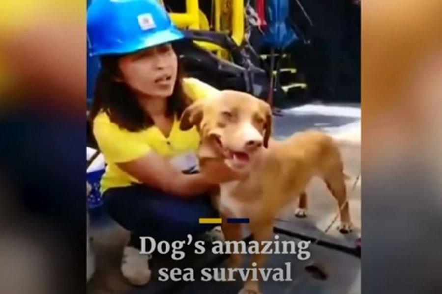 Ταϊλάνδη: Σκυλάκι βρέθηκε ζωντανό 220 χιλιόμετρα μακριά από τις ακτές