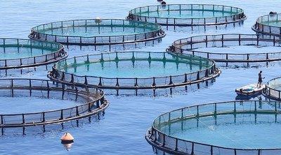 Νορβηγία: Τοξικό φύκι αποδεκατίζει εκατομμύρια σολομούς εκτροφής