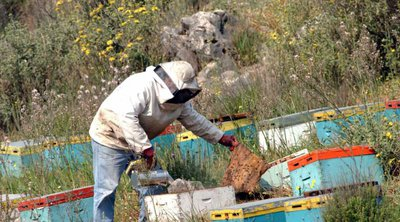Στήριξη 120 εκατ. ευρώ στον μελισσοκομικό τομέα της ΕΕ ανακοίνωσε η Κομισιόν