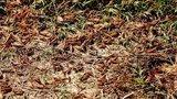 Επιδρομή εκατομμυρίων ακρίδων στη Σαρδηνία, σε απόγνωση οι αγρότες