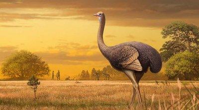 Κριμαία: Ανακάλυψαν απολιθώματα γιγάντιων πουλιών - Τριπλάσια από στρουθοκάμηλους