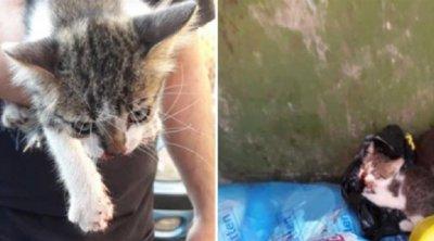 Χτύπησε με καδρόνι γατάκι και το πέταξε στα σκουπίδια