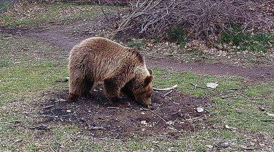 Βουλγαρία: Παγωτό για ...αρκούδες στον ζωολογικό κήπο στην πόλη Ντόμπριτς