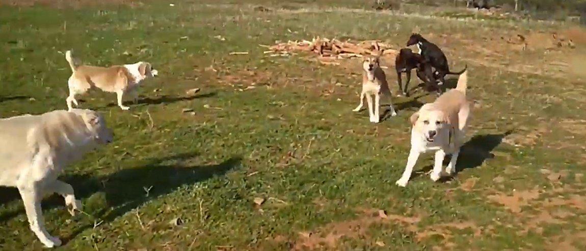 Αγέλη σκύλων τραυμάτισε σοβαρά δυο νοσηλευτές