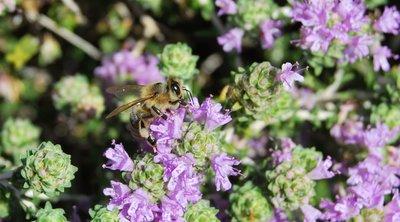 Έρευνα: Τα φυτά βγάζουν υπερηχητικά «ουρλιαχτά» όταν στρεσάρονται, υποστηρίζουν Ισραηλινοί επιστήμονες
