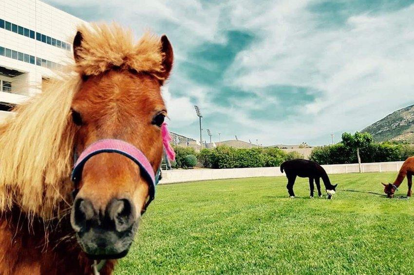 Ιππασία με πόνυ στο Markopoulo Park