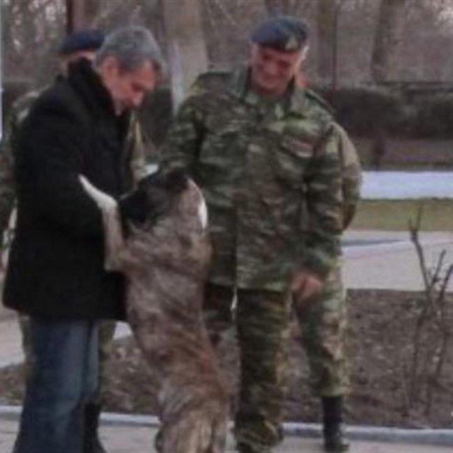 Ο σκύλος που... ζήτησε -και βρήκε- «άσυλο» περνώντας από την Τουρκία στην Ελλάδα