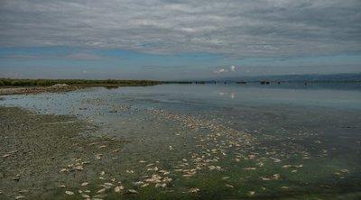 Βουλγαρία: Νεκρά ψάρια ξεβράστηκαν στις όχθες ποταμών