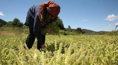 Παρατείνεται η άδεια παραμονής των αλλοδαπών εργατών γης