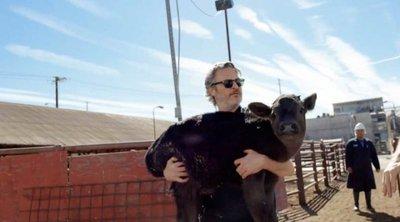 Ο Χοακίν Φίνιξ έσωσε αγελάδα και το μοσχαράκι της από το σφαγείο