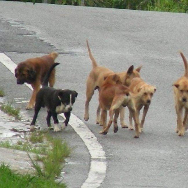 Θεσσαλονίκη: Η οικογένεια του 22χρονου που δέχτηκε επίθεση από αγέλη σκύλων ευχαριστεί όσους τον έσωσαν
