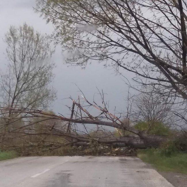 Πτώσεις δέντρων και προβλήματα στην Ξάνθη – Κατέρρευσε τοίχος