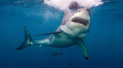 Αυστραλία: Λευκός καρχαρίας κατασπάραξε 15χρονο σέρφερ