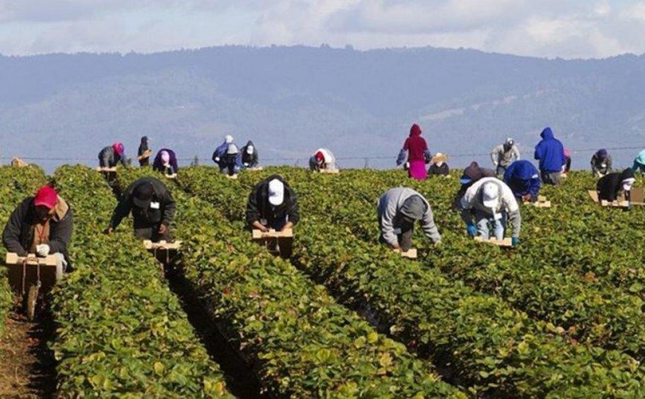 Συναγερμός στη Λακωνία: Θετικοί στον κορωνοϊό 32 εργάτες γης στον δήμο Ευρώτα - ΒΙΝΤΕΟ