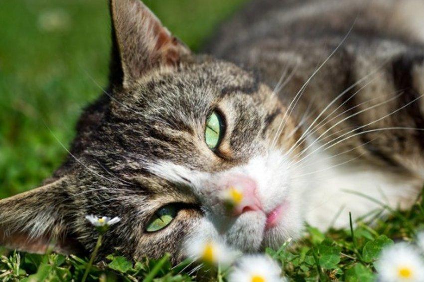 «Έξυπνη» εφαρμογή μεταφράζει τα νιαουρίσματα των γατών με τη βοήθεια της τεχνητής νοημοσύνης