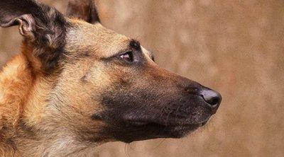 Διαγωνισμός για 193 στρατιωτικούς σκύλους στις Ένοπλες Δυνάμεις