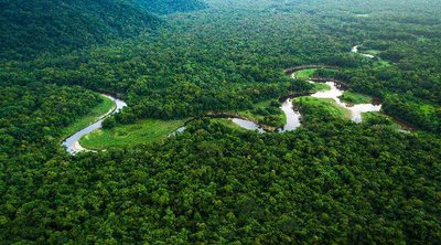 Κίνα: H κλιματική αλλαγή θα «χάσει» στα δάση του φενγκ σούι
