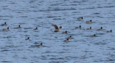 Μεσοχειμωνιάτικες καταμετρήσεις πουλιών στους υγρότοπους της Λέσβου