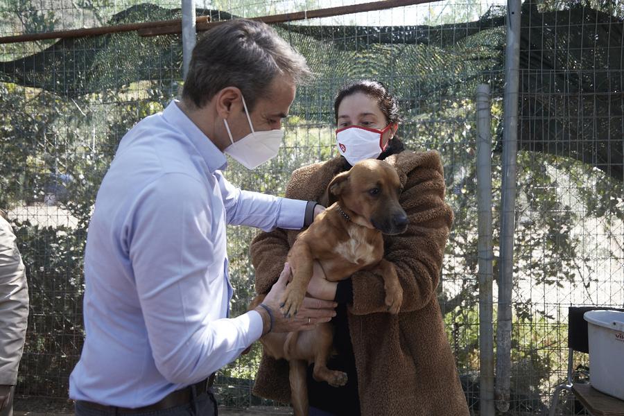 Μήνυμα Μητσοτάκη για την Παγκόσμια Ημέρα Αδέσποτων Ζώων: Ανοίξτε την αγκαλιά σας και σώστε ένα αδέσποτο   ενότητες, πολιτική   Real.gr