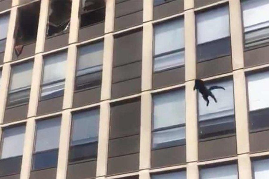 Γάτα έπεσε από τον πέμπτο όροφο και συνέχισε ατάραχη να περπατά - ΒΙΝΤΕΟ