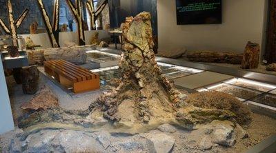Πρωτοπευκίδες, κανελόδενδρα, δαφνίδες, λεύκες, τα νέα ευρήματα στο Μουσείο Φυσικής Ιστορίας Απολιθωμένου Δάσους
