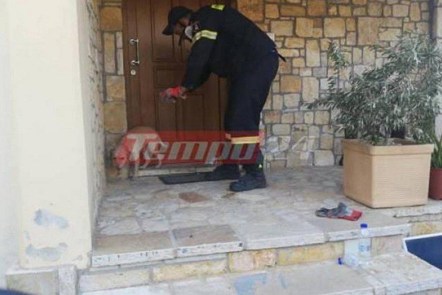 Φωτιά στην Αχαΐα: Τι είπε ο πυροσβέστης που συγκίνησε, δροσίζοντας ένα φοβισμένο σκυλάκι - ΒΙΝΤΕΟ