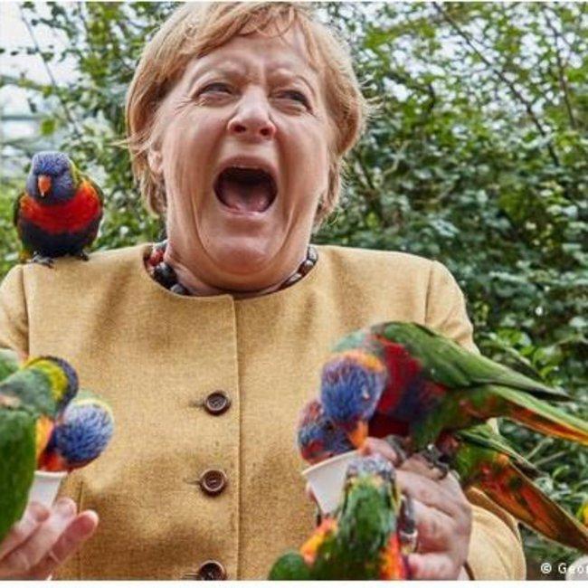 Μέρκελ: Tη δάγκωσε παπαγάλος σε πάρκο πτηνών