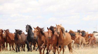 Νέες επιστημονικές εκτιμήσεις: Τα σύγχρονα άλογα εξημερώθηκαν πριν 4.200 χρόνια στις στέπες Πόντου-Κασπίας του Βόρειου Καυκάσου